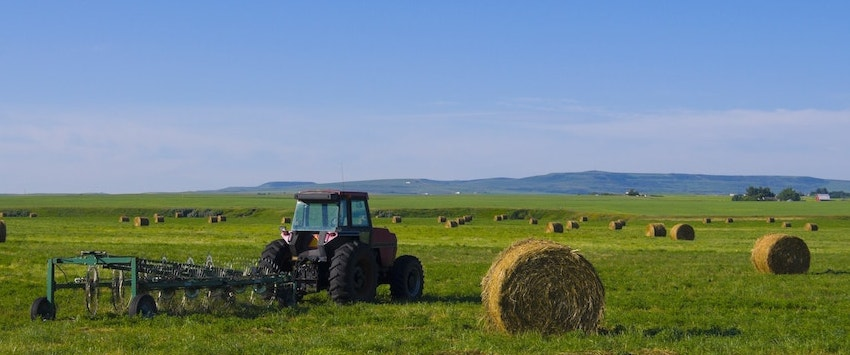BAGGED FORAGE AND GRASS SEED | Dawson Creek