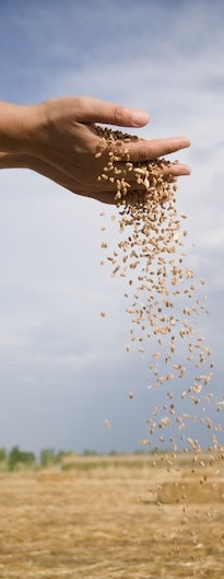 Custom Trucking | Grain | Fertilizer | Peace River